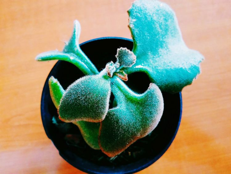 🌱🌱 Close-up Green Color Potted Plant Indoors  Table Plant Nature Things Around Taking Photos Green Color Plant Life Beauty In Nature
