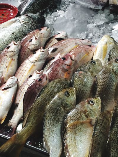 Fish Fresh Market Marketplace Fish Market Food Food Market Fresh Fish Market Fresh Fish From Lake Fish From Sea