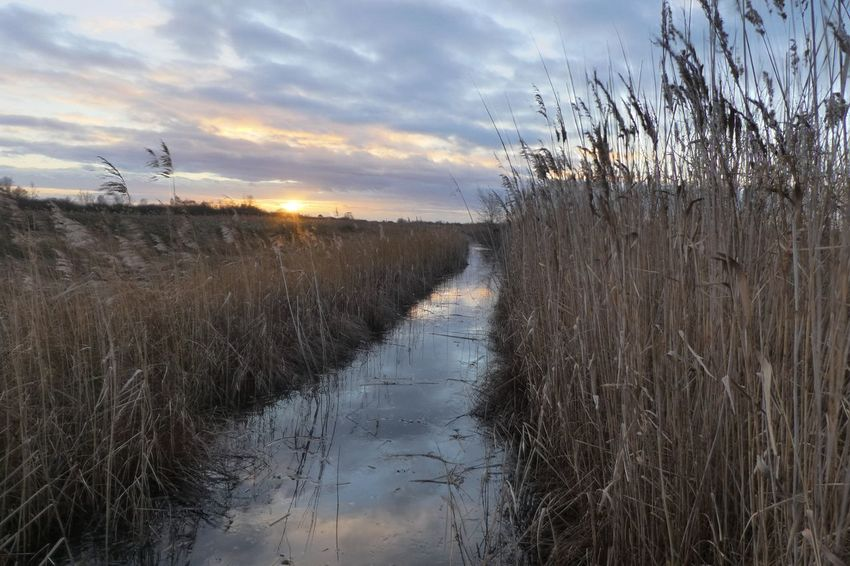 Winter Sunset Grasses And Sun Reflection Water Sedge Fenland Nature Sky Tranquil Scene No People Landscape Grass Field Outdoors Sunset Scenics Day Beauty In Nature