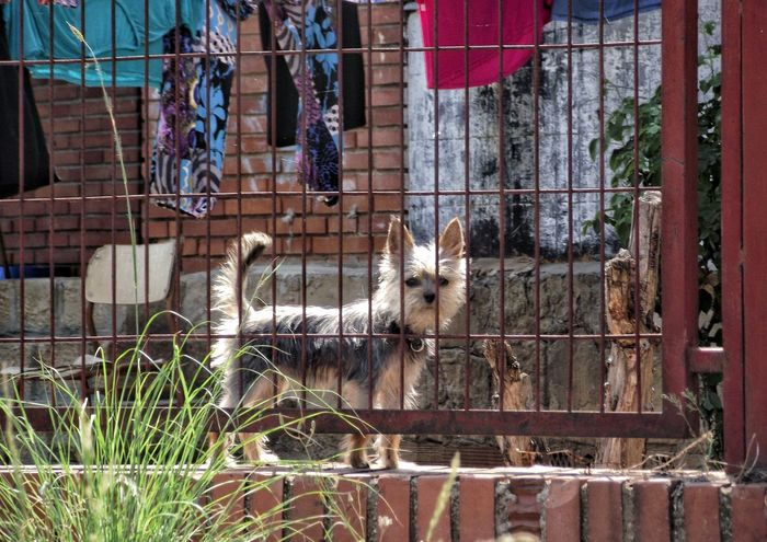 Dogs Guard Duty Stree Photography Urban Nature