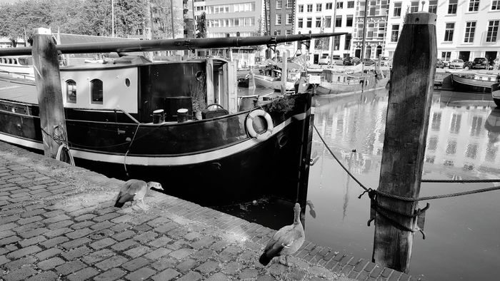 Sightseeing My City Blackandwhite Old Port Black And White Blackandwhite Photography Old Port Old Harbour Ships Boats Enjoying The Sun Taking Pictures Taking Photos My City Is Beautiful Nature In The City Nature On Your Doorstep Birds Birds Of EyeEm  Birds In The City Nature Versus Civilization