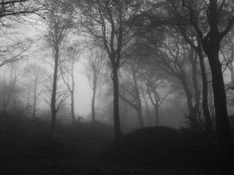 woods in Leeds Woods