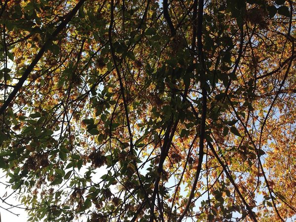 Many Autumn Photo PF PF