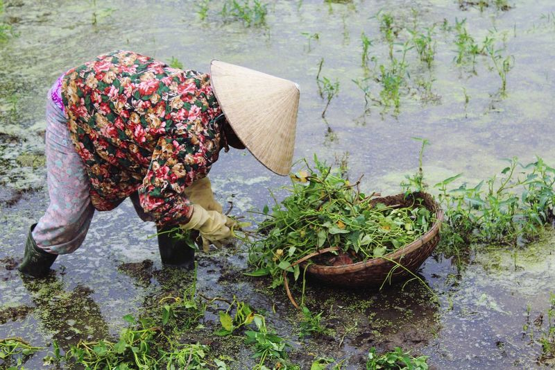 Working woman in the field. Unrecognizable Person Working Hard Vietnam Field Hoi An Hoi An, Vietnam Nature ASIA South East Asia Feel The Journey Myyearmyview