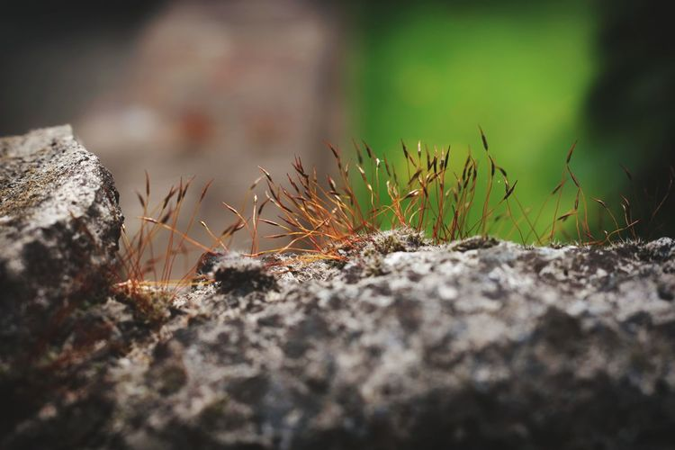 Close-up Grass Moss Mushroom Blooming Tree Stump Wild Plant Life Young Plant Tree Ring