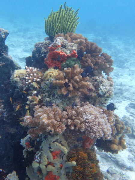 Corals Diving Nature Animal Themes Beauty In Nature Coral Diving Photography Nature No People Sea Sea Life UnderSea Underwater Underwater Photography Water