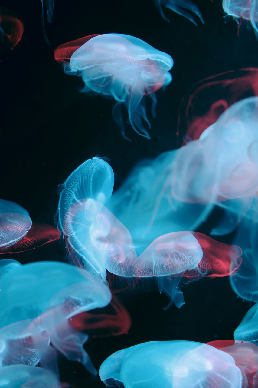 animal themes, animal wildlife, sea, animals in the wild, animal, swimming, water, group of animals, underwater, sea life, marine, no people, jellyfish, invertebrate, close-up, vertebrate, transparent, large group of animals, nature, undersea, school of fish