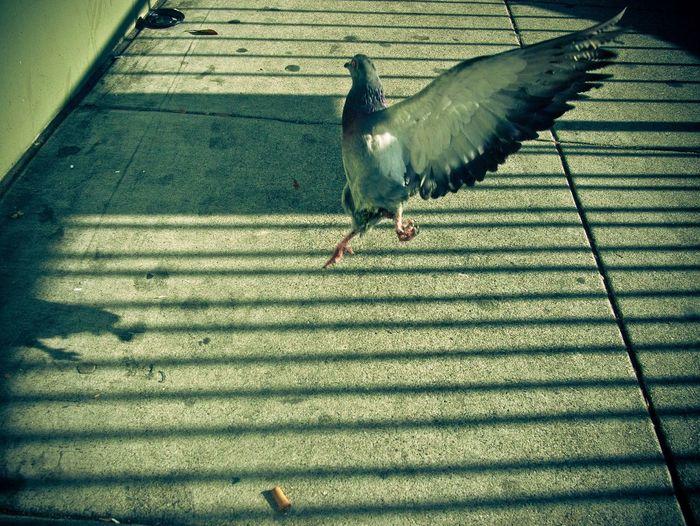 Urban birds at San Francisco Urban Birds