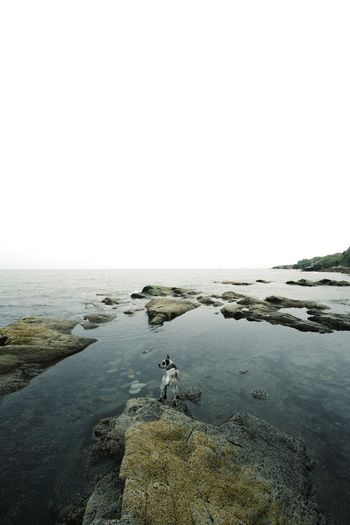Live For The Story Sea Horizon Over Water Nature Water Rock - Object Beach Tranquility Scenics Tranquil Scene Clear Sky Day Outdoors No People Beauty In Nature Sky Animal Themes Bird dog First Eyeem Photo