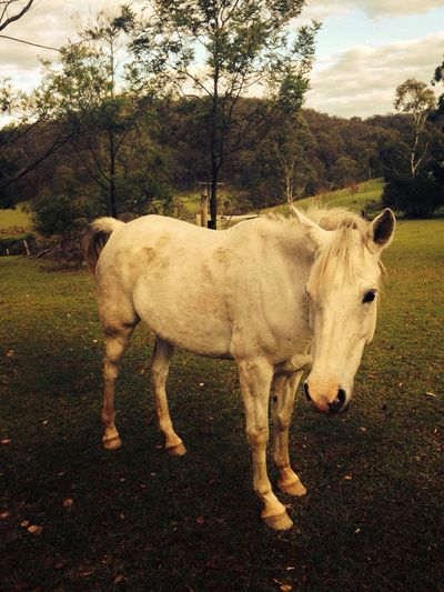Horse Pets Putty Nsw