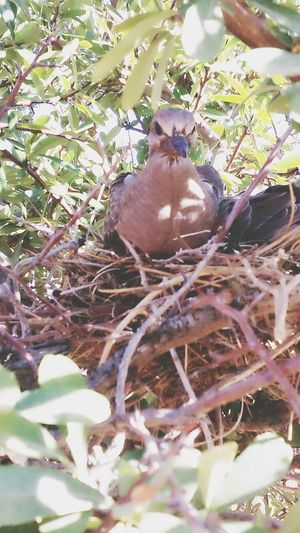 Baby Dove Bird Photography Birds🐦⛅ Birds Of EyeEm  Nesting Place Desert Life Desert Birds Helloworld
