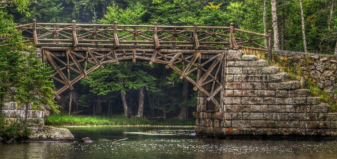 Man walking on bridge in forest