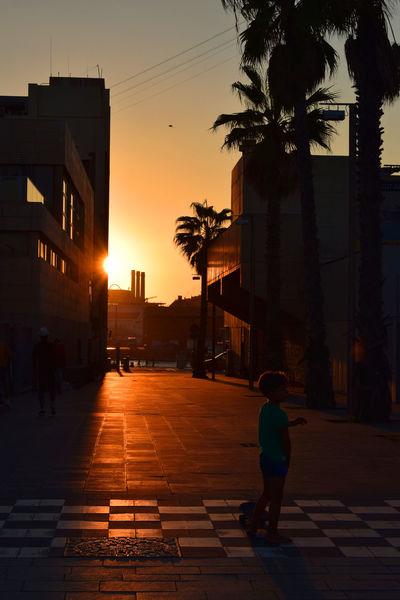 Palm Tree Sunlight Barcelonalife Building Light And Shadow Photoart Seightseeing Sundown
