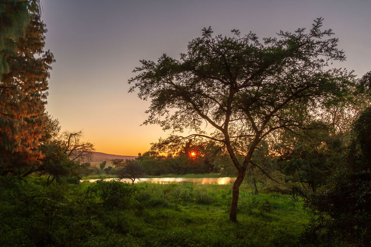 Tree Plant Sky Beauty In Nature Tranquility Tranquil Scene Scenics - Nature Nature Growth No People Grass Land Outdoors Landscape Non-urban Scene Environment Sun Green Color Goldenhour My Best Photo