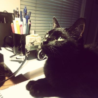 Workspace kitty is distracting Work Catspace Cats