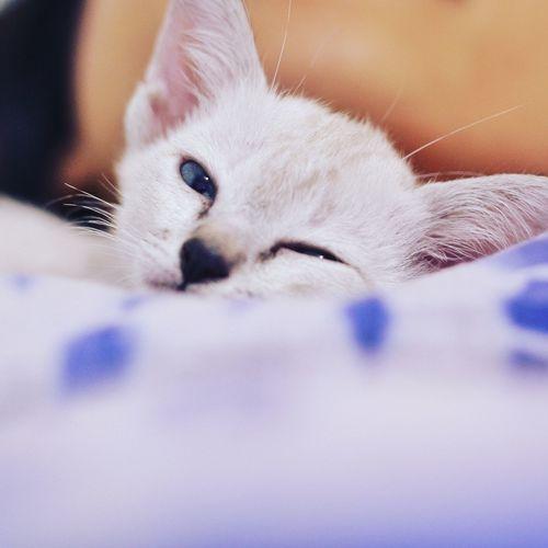 Close-up portrait of white kitten