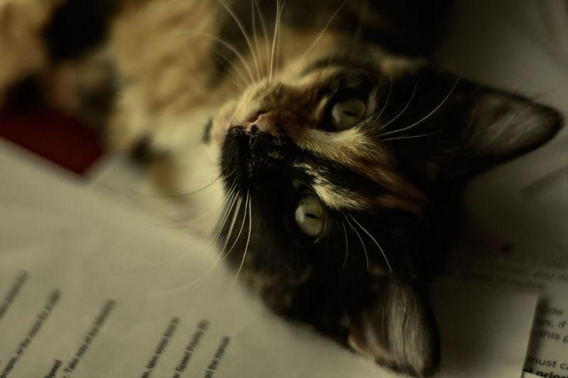 Luna Pets
