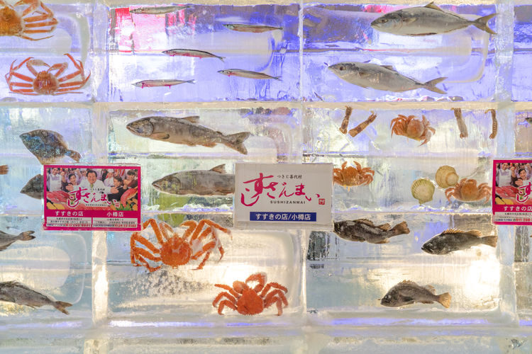 Crab Ice Seafood Animal Animal Themes Close-up Communication Creativity Day Fish Full Frame Glass - Material Indoors  Multi Colored No People Number Pattern Representation Sea Sea Food Text Transparent Western Script Window
