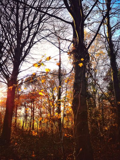 Leigh Woods Bristol Autumn colors Autumn Trees And Sky Aesthetics Empty Fall Wood Tree Backgrounds Full Frame Sky Close-up Branch Bare Tree Woods Dead Plant Dead Tree Growing Tranquility Calm Sunset Tree Trunk Silhouette Autumn Mood EyeEmNewHere