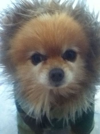 Cute Pets Cold Winter ❄⛄ Cold As Hell My Cute Boy