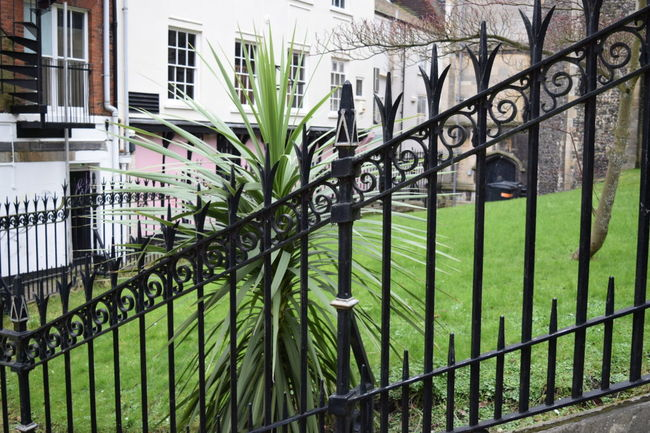 Taking Photos The Purist (no Edit, No Filter) Straight Out Of The Camera Railing _ Collection Ornate Ironwork  Plant Life Churchyard Lines, Shapes And Curves Windows Old Part Of My City Nikon D3300 Norwich Spiral Staircase