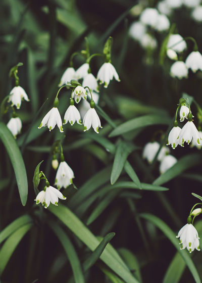 Spring in Kew Spring Springtime Spring Flowers spring into spring Spring Has Arrived Flower Flowering Plant Plant Growth Beauty In Nature Vulnerability  Freshness Fragility Petal Close-up White Color Focus On Foreground Flower Head Nature Inflorescence Day Green Color Selective Focus Leaf Outdoors