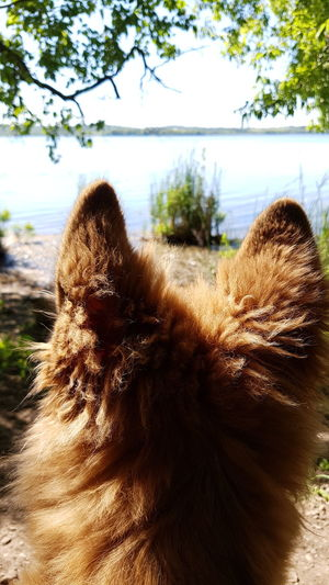 Germanshepherd Dog Love GSD Gsdpuppy Dog German Shepherd Puppy Nature Trails Walk Hike Lake