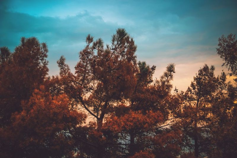 Showcase: February EyeEm Woman Autumn Collection Autumn 2015 Kamilzakeryaev Beautiful Autumn Colors Of Autumn Nature_collection Beautiful Nature Autumn Colors Nature Park Teers