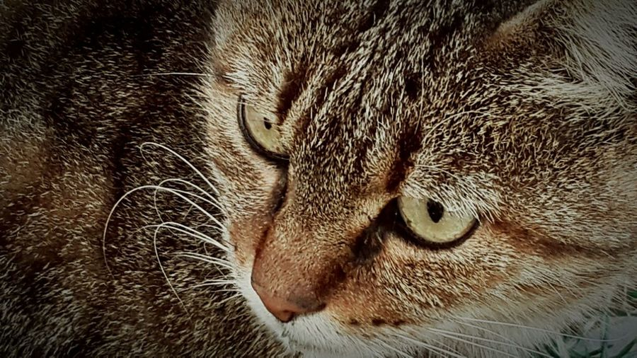 Sweet Pets Cats Cat Eyes Pet Photography  do you love the cats?
