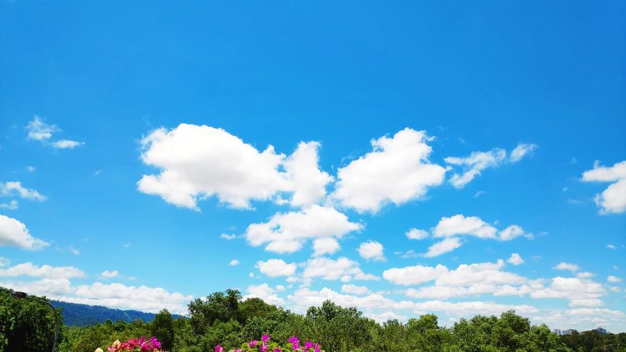 Blue sky wity clouds Blue Sky Clouds And Sky Cloudscape Cloudporn Nature Backgrounds Nature Photography Flower Tree Blue Flower Head Springtime Summer Multi Colored Beauty Sky Plant In Bloom Plant Life Blossom Botany Blooming