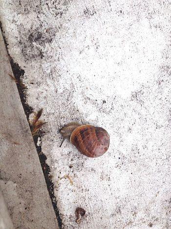 Encore... Escargot Snail From My Window Jour De Pluie Rainy Day