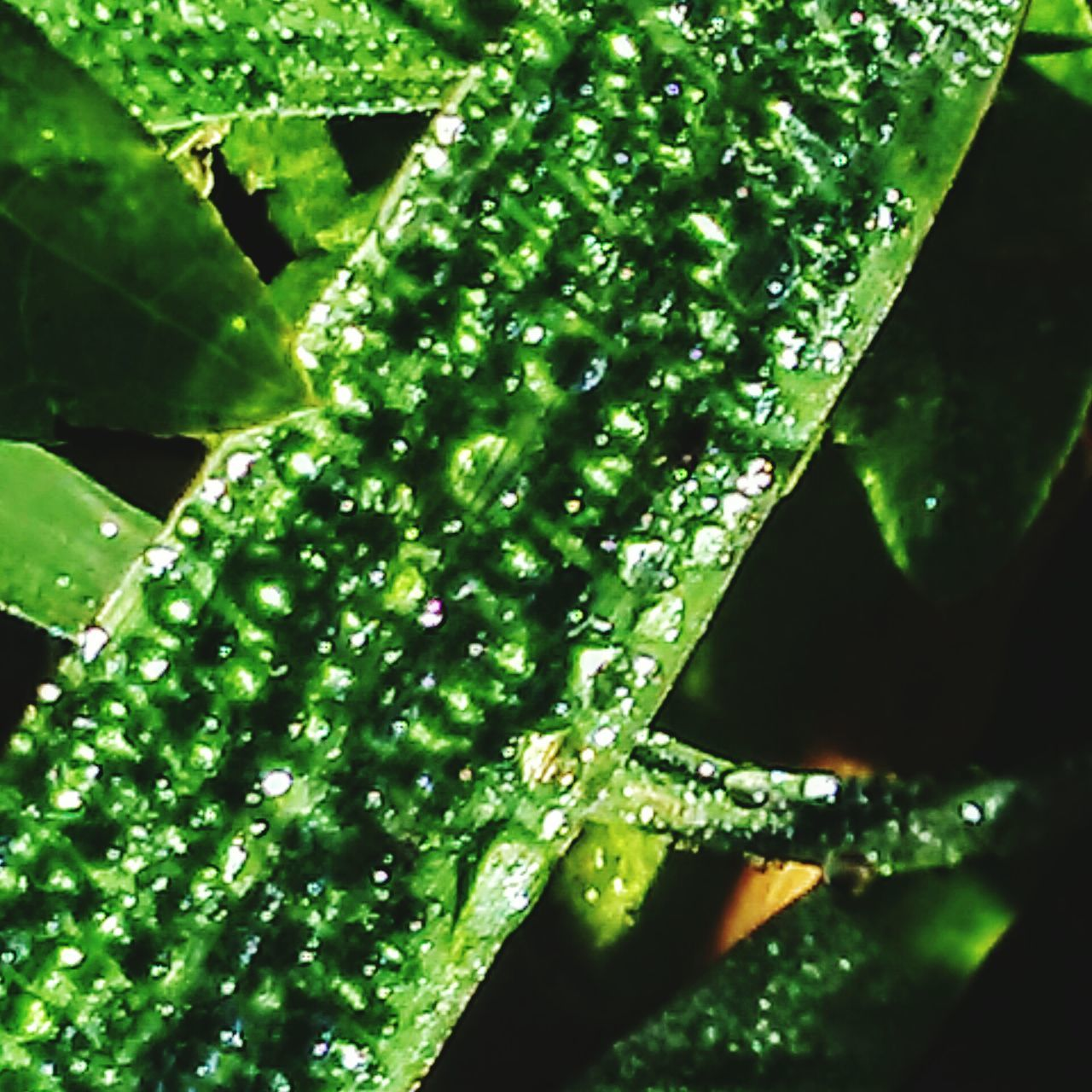 green color, leaf, nature, drop, water, freshness, beauty in nature, growth, plant, close-up, no people, day, wet, outdoors, fragility, raindrop