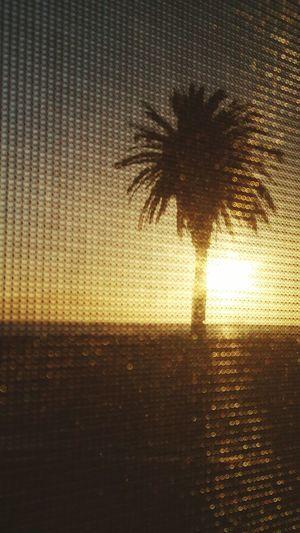 Taking Photos Enjoying Life Nature Photography Trees Window View Window Shade Sunset