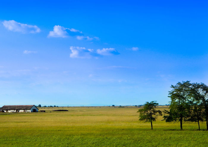 Shot at the border fields of hometown, on a nice shiny day in August. Agriculture Beauty In Nature Blue Cloud Countryside Day Field Grass Green Horizon Over Land Landscape Nature Non-urban Scene Outdoors Rural Scene Sky