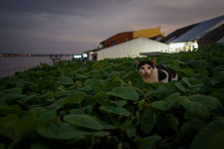 Cat in a green plant against the sky