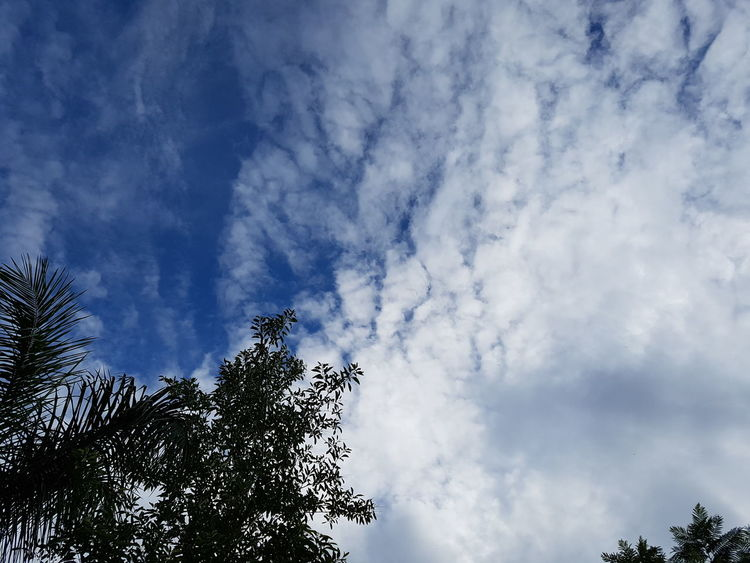 Sky Low Angle View Cloud - Sky Nature Day Outdoors No People