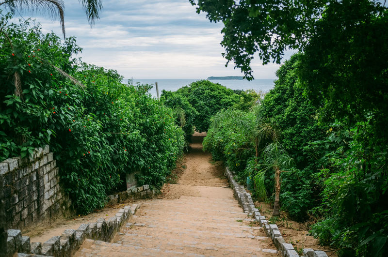 Architecture Beach Beauty In Nature Brazil Day Florianópolis Green Color Growth Jungle Nature No People Outdoors Plant Scenics Sky The Way Forward Tranquility Tree Walkway Water