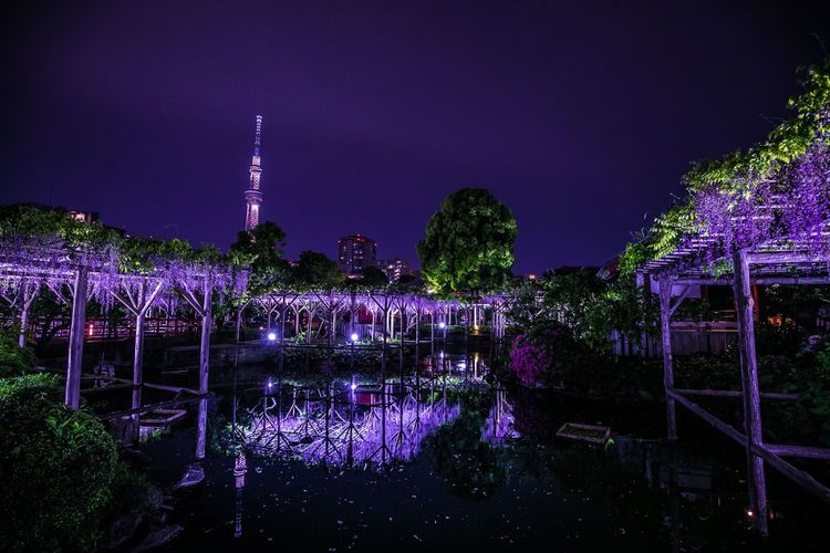 夜の藤、黄金構図。 なんかもうTOKYOって感じがする風景よね。 Night Built Structure Architecture Illuminated Sky Water Building Exterior Tree Reflection Plant Nature No People River City Building Tower Waterfront Dusk Outdoors Purple