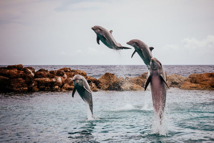 Dolphins, dolphinarium, spectacle, show, animal, water, fish, jump, splash, sunny day, outside