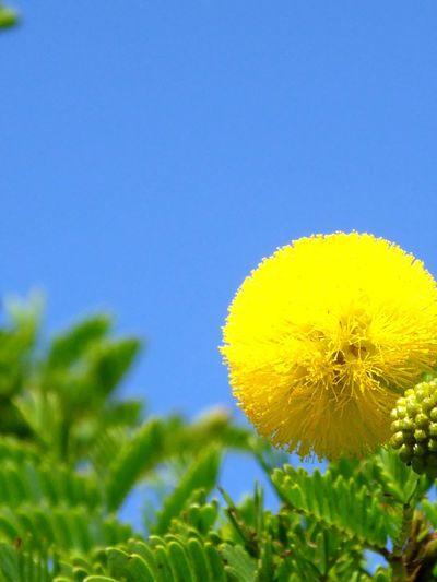 Nature Plant Tree Beauty In Nature No People Leaf Flower Outdoors Sky Green Color Day Close-up Plant Part Flower Head Clear Sky Place Of Heart