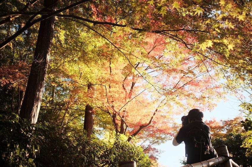 ELMARIT-M 28mm F2.8 京都 Fuji X-T1 Taking Photos Enjoying Life Hello World FUJIFILM X-T1 撮る人