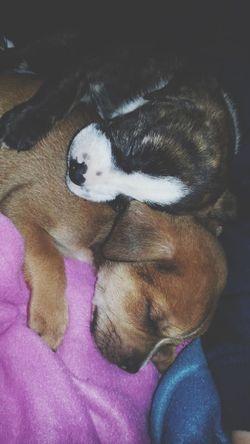 Always Be Cozy Pets Cuddle Buddies