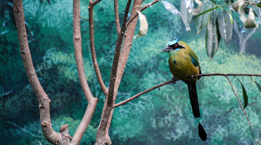 Colorful bird on a branch
