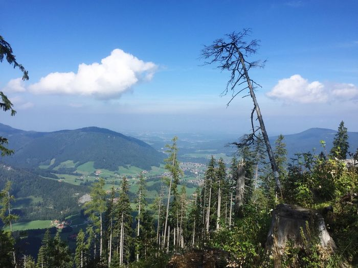 View from mountain Unternberg in the Bavarian alps Sky Mountain Tree Nature Cloud - Sky Growth No People Beauty In Nature Tranquility Day Landscape Outdoors Forest Scenics Unternberg Bavarian Landscape Bavarian Alps Bavarian Bavaria Germany🇩🇪 Tree Tranquil Scene Nature Beauty In Nature
