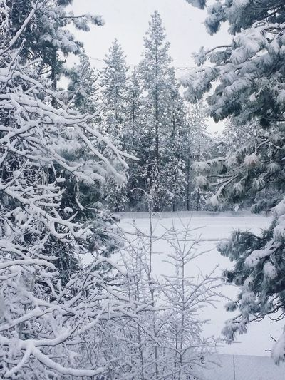 Winter Winter Trees Winter_collection Winter 2015 Winterscapes Winter Wonderland Winter Scenes Wintertime Snow Covered Landscape Snow Covered Trees Snow Snowfall Snow Collecton Snow Covered Christmas Time Christmas Around The World Tree_collection  Spokane Wa Winter Landscape Snowing Snowscape December 2015 EyeEm Around The World Its Cold Outside