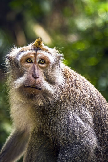 Portrait of monkey sitting on looking away