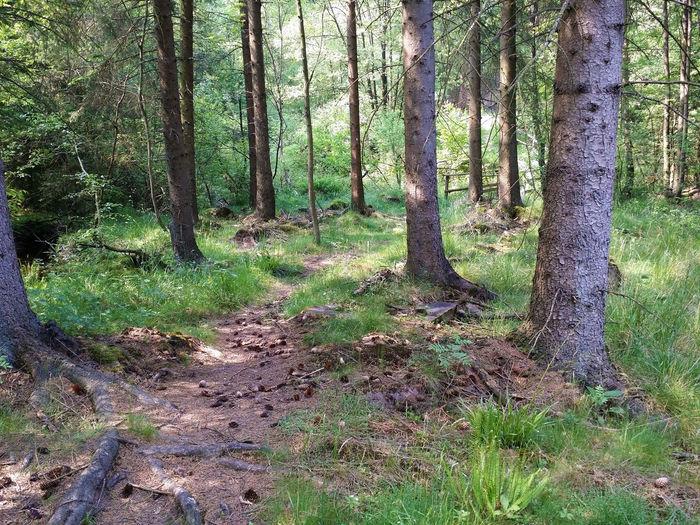 Wald Wood Pfad