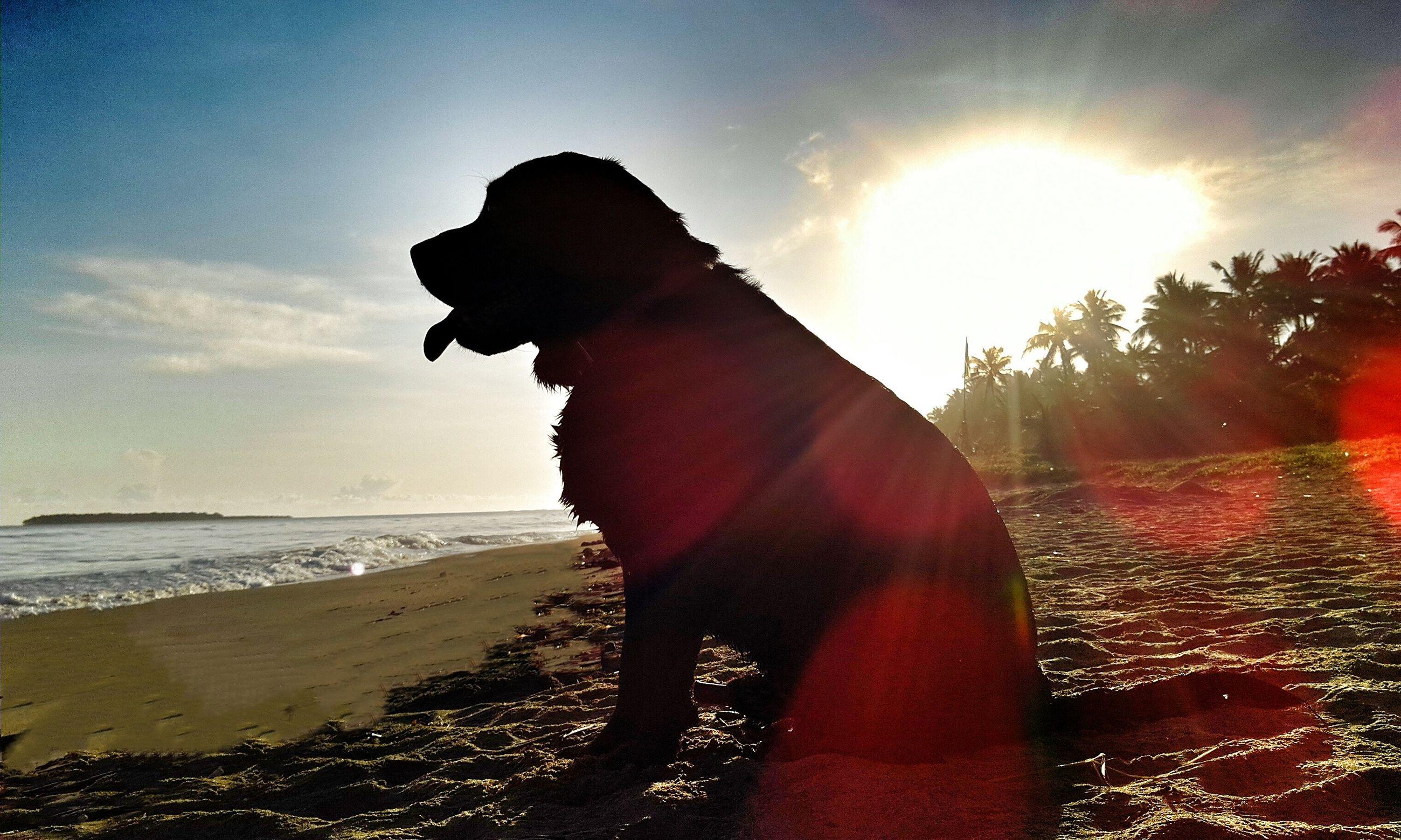 sun, beach, sunlight, sunbeam, sky, sea, lens flare, water, sunset, horizon over water, sand, shore, sunny, nature, beauty in nature, scenics, tranquility, cloud - sky, tranquil scene, outdoors