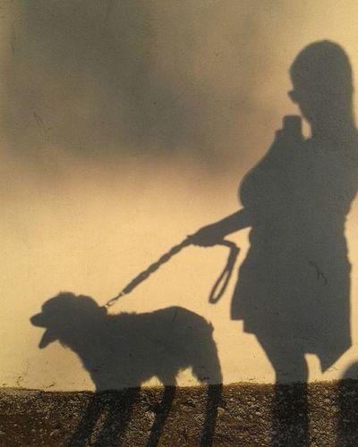 Nofilter Walkwithmydog Shadow My Dog Shadowplay Shadoes And Light