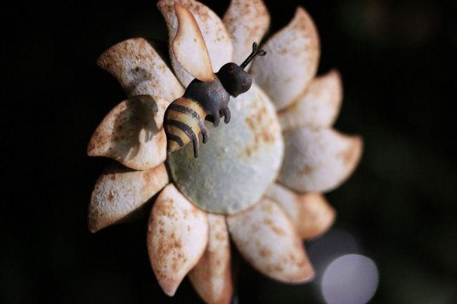 EyeEm Selects Sunflower Bee Metallic Limassol Cyprus Rusty Rust Metalic Object Metalic And Rusty Surface